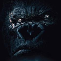 Kong Skull Island Movie Trailer 2017